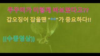 쭈꾸미 갑오징어 먹이활동 수중영상 놀라운사실 영상보시면 대박조황 가능
