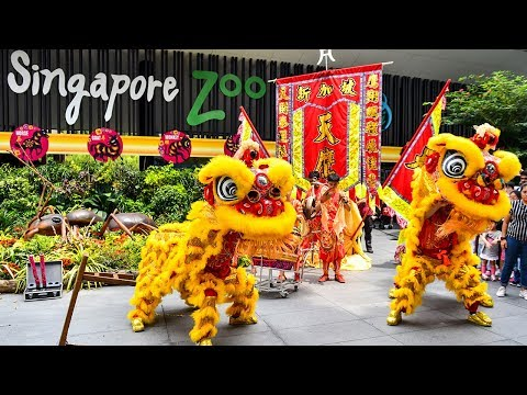 Singapore Zoo Lion Dance