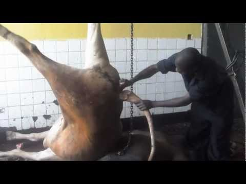 Animal Slaughter in Africa HD Raw Footage