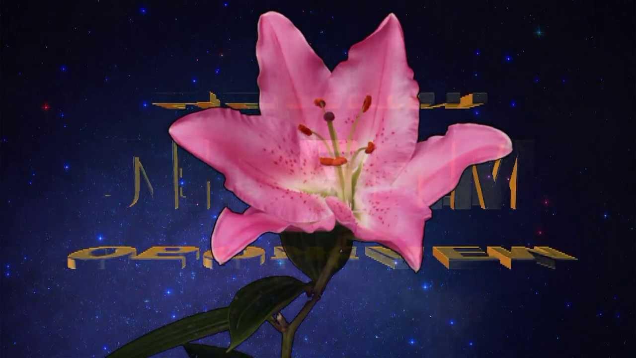 Эльвире открытка, февраля