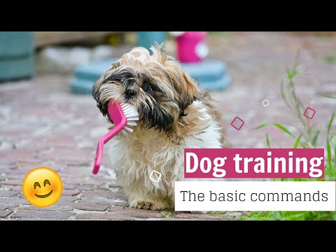 dog-training–the-basic-commands|dog:-how-to-train-any-dog-the-basics-2020|teaching-your-dog-basic