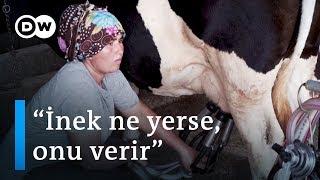 Gıda güvenliği (4): Sağlıklı süt için hayvanın ne yediğini bilmeniz gerek - DW Türkçe