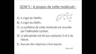 QCM | UE 1 | Biologie moléculaire