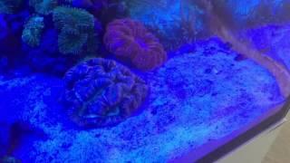 Elos reef aquarium