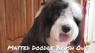 Beautiful Doodle gets a brush out