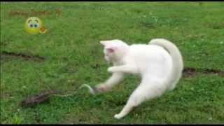 10 trận chiến kinh điển của mèo và rắn.