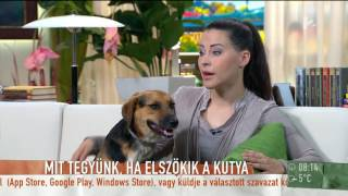 Kasza Tibi azt hitte átverik, amikor felhívták, hogy előkerült Szabó Dóra kutyusa... - tv2.hu/mokka