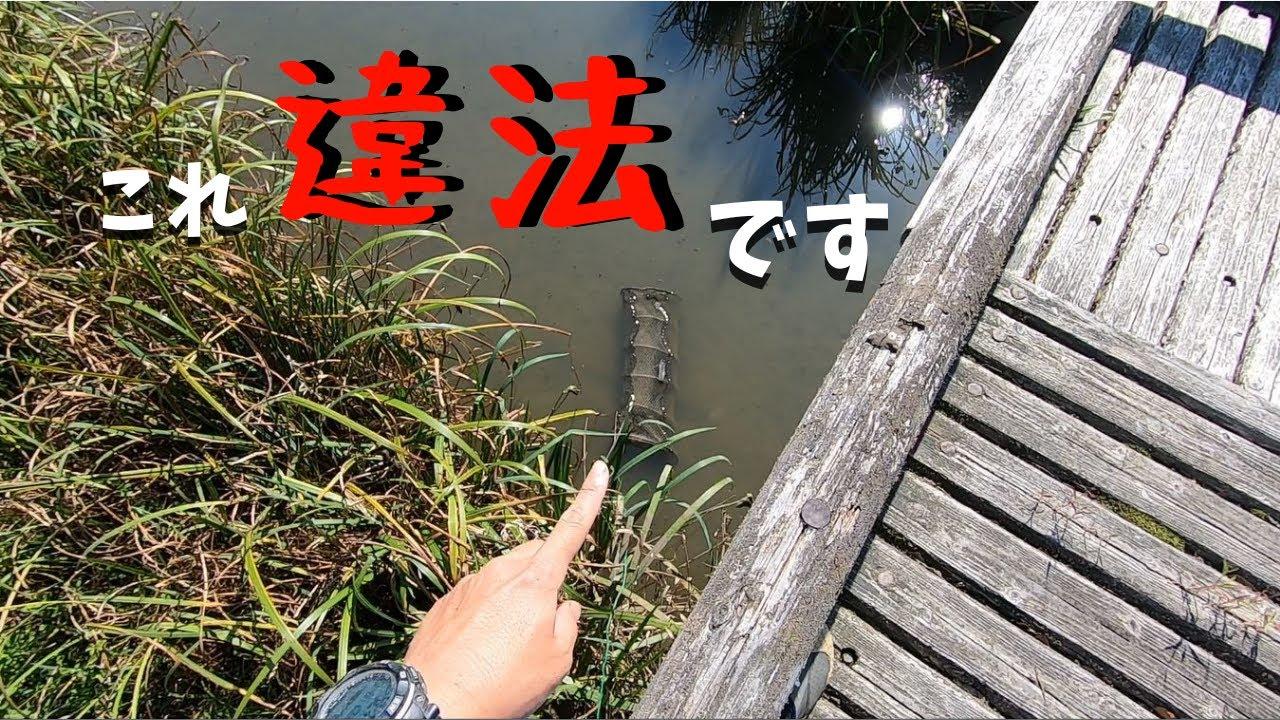 魚捕りしてたら違法罠見つけたので通報しました…【琵琶湖ガサガサ探検記55】