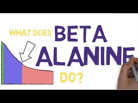 BETA ALANINE EXPLAINED What is Beta Alanine?