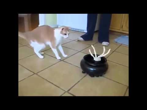 GATOS ASUSTADOS CHISTOSOS ★ Gatos chistosos y locos, videos de risa