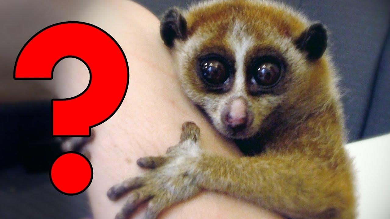 Most dangerous cute animals