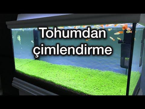 Akvaryum Bitki Tohumu (Carpet Seeds)