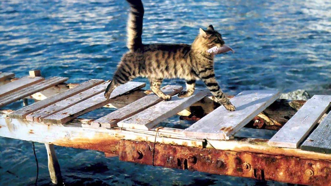 Кот ловит рыбу на удочку