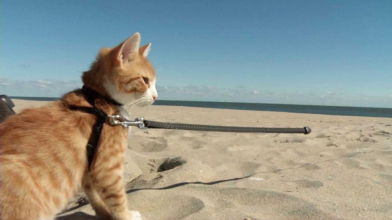 Getting To Know Pip The Beach Cat You