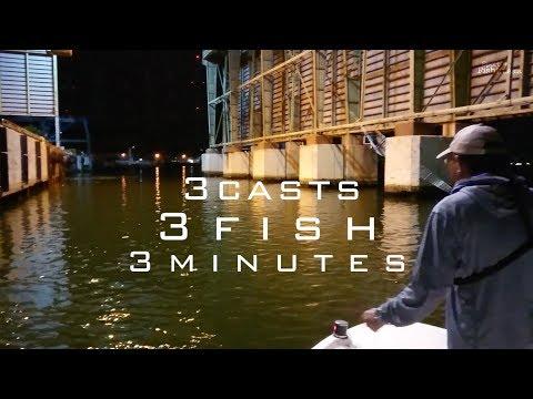 3 Casts 3 Fish 3 Minutes (Fly Fishing Japanese Seabass In Osaka Bay, Japan)