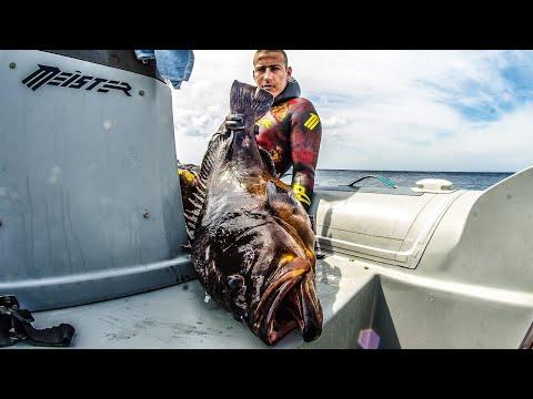 Αναζητώντας τους μεγάλους ροφούς - Spearfishing In search of the Great Dusky ✔