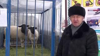 Новые виды овец из Канады - Выставка Агро 2018