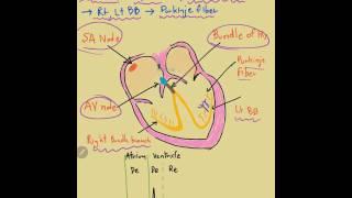 EKG style นุชชี่ part 1