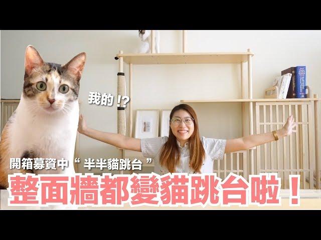 改造小貓房!把整面牆都變成貓跳台啦!【好味貓開箱】EP14