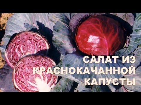 Краснокочанная капуста. Салат. Простой и вкусный рецепт.