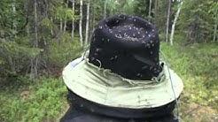 hyttyset mosquitoes