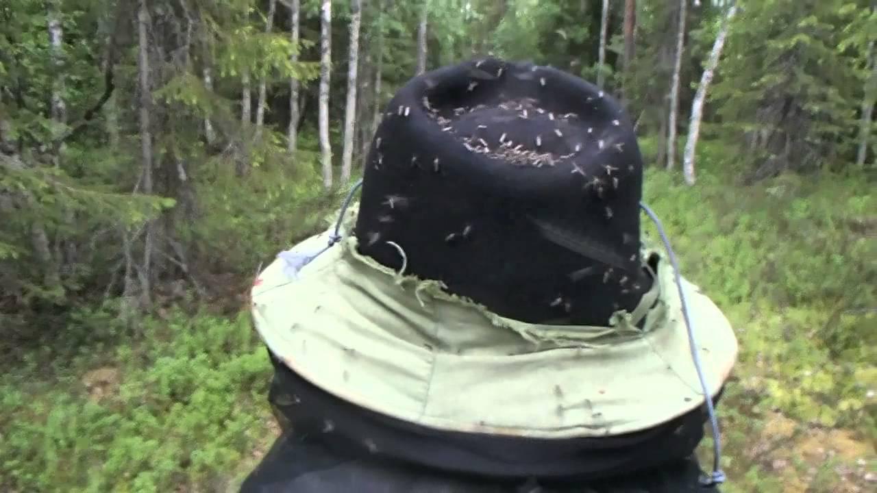 Hyttyset