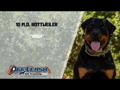 rottweiler-/-dog-training