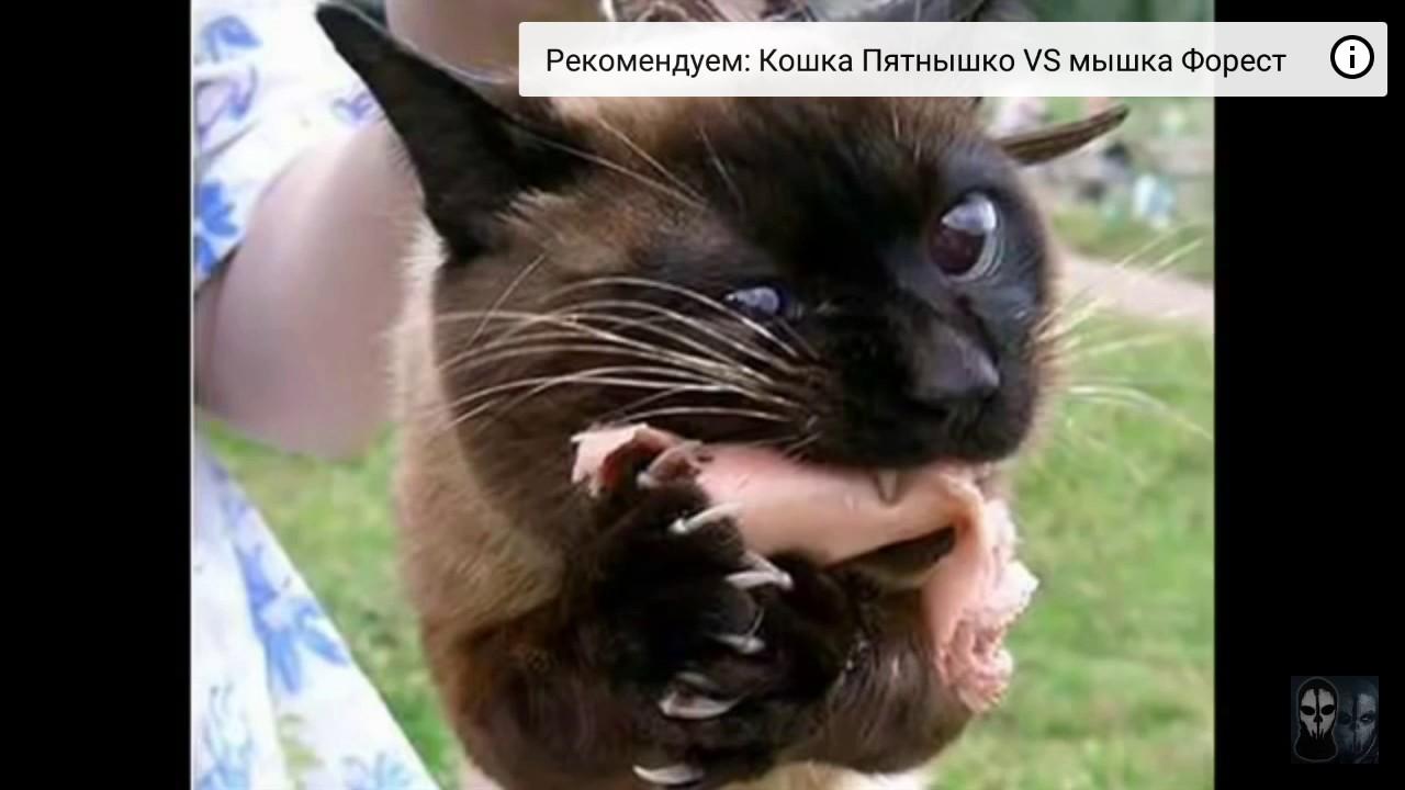масяня песня про кота слушать видео