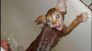 Кошки и вода. Очень смешное видео. СМОТРИТЕ.
