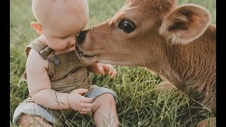 Babies and baby Cow become friends   Funny Babies and Pets Compilation