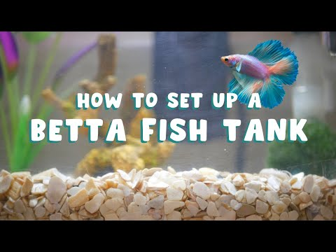 HOW TO SET UP A BETTA FISH TANK | The Correct Way