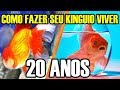 COMO FAZER SEU KINGUIO VIVER +
