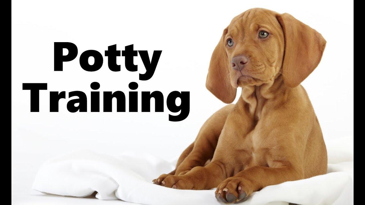 How to potty train a vizsla puppy biting