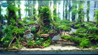 Rainforest environments in the aquarium beautiful-The Big Scrub Rainforest in Aquarium
