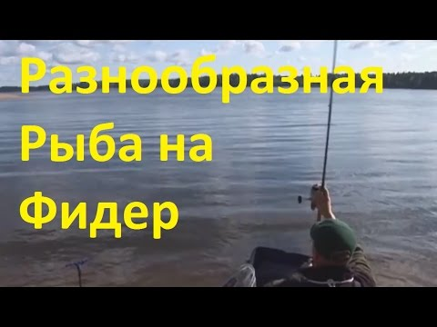 ловля линя на истринском водохранилище