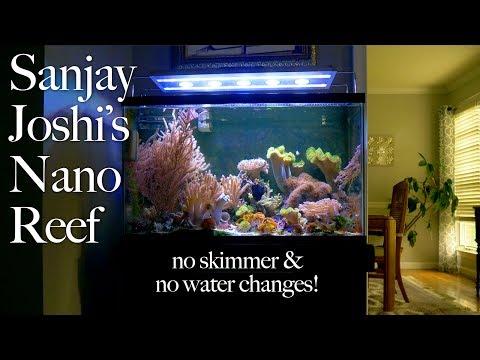 Sanjay Joshi's Nano Reef Tank is 23 YRS OLD, No Skimmer, No Water Changes!