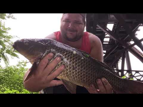 Carp Fishing Easton PA Delaware Canal.