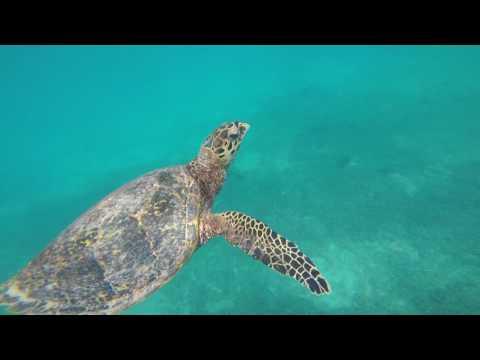 Seychelles Summer Edit