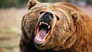 Охота на охотника. Гибель человека медведя. Документальный фильм.