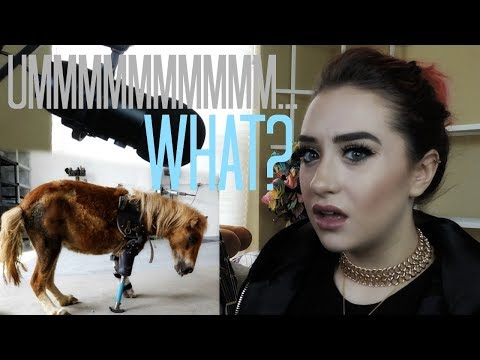 People Who NEED To Take A Test To Own Animals - Raleigh Reacts