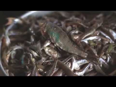 Local Food in Nepal - Fish in Malekhu