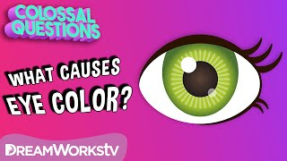 Why Are There Different Eye Colors? | COLOSSAL QUESTIONS