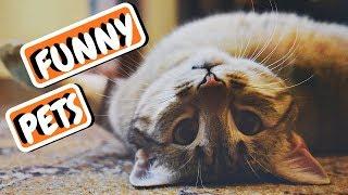 Funny Animal Compilation | Dog Fail | Funniest Animals 2019
