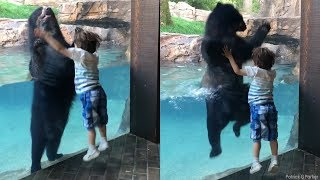 leap for joy bear jumps with boy at nashville zoo