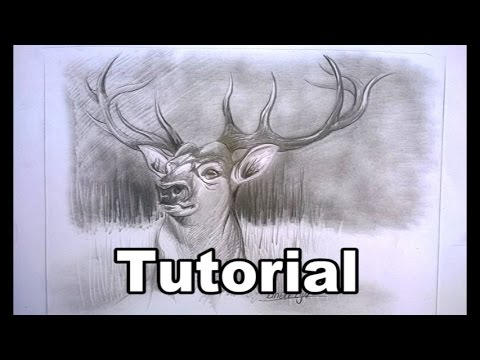 Easy DEER For Beginners Graphite Drawing