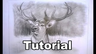DEER drawing in graphite - very easy for beginners