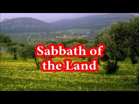 The Sabbath of the Land: Rotating Fields, or National Observance?