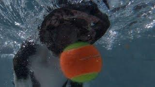underwater dogs in slow motion 1000 fps orapup com