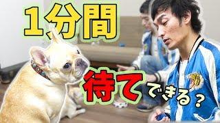 くるみちゃんのしつけ度チェック!? thumbnail