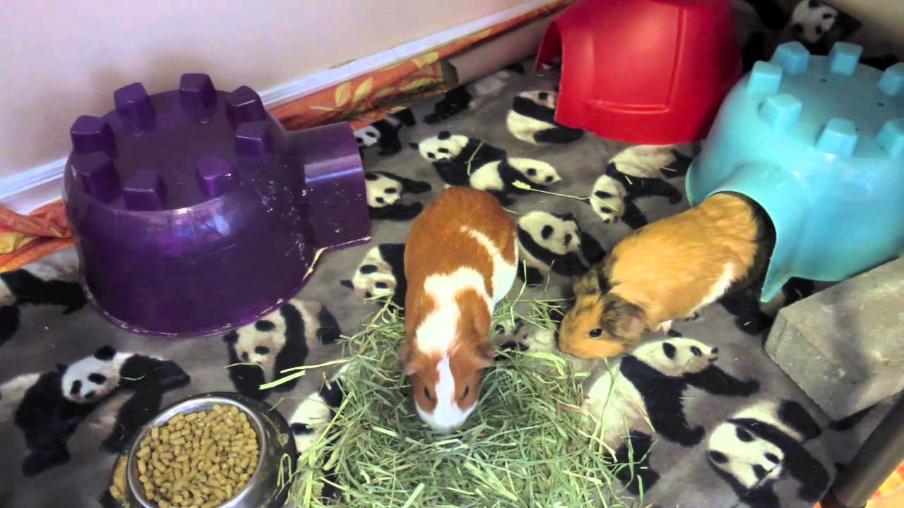 bottle ferret feeder pig water with guinea cage rabbit stackable